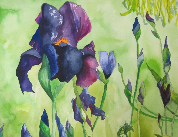 Lipson, Les Tuileries Irises, 2013, Watercolor on paper